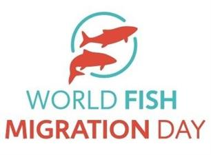 Doe mee aan de World Fish Migration Day op 21 mei 2016